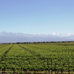 Andeluna Vineyards and the Tupungato Volcano from the Restaurant | Photo: Eddy Ancinas
