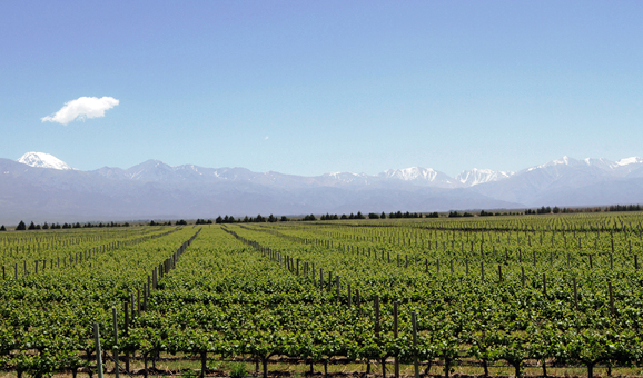 Andeluna Vineyards and the Tupungato Volcano from the Restaurant Andeluna | Photo: Eddy Ancinas