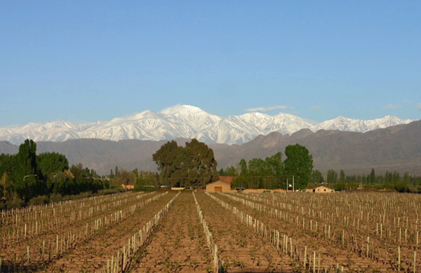Vineyard and Andes Mountains in Mendoza Wine Region, Argentina/ Photo: Eddy Ancinas
